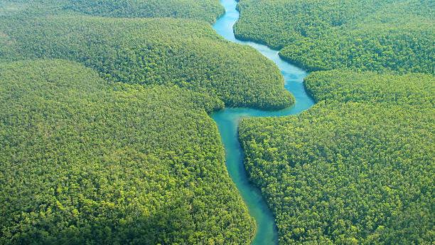 Economist vê Amazônia sob risco de morte e pede vigília global